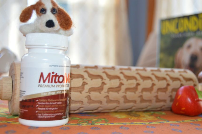 dr marty dog food small breed
