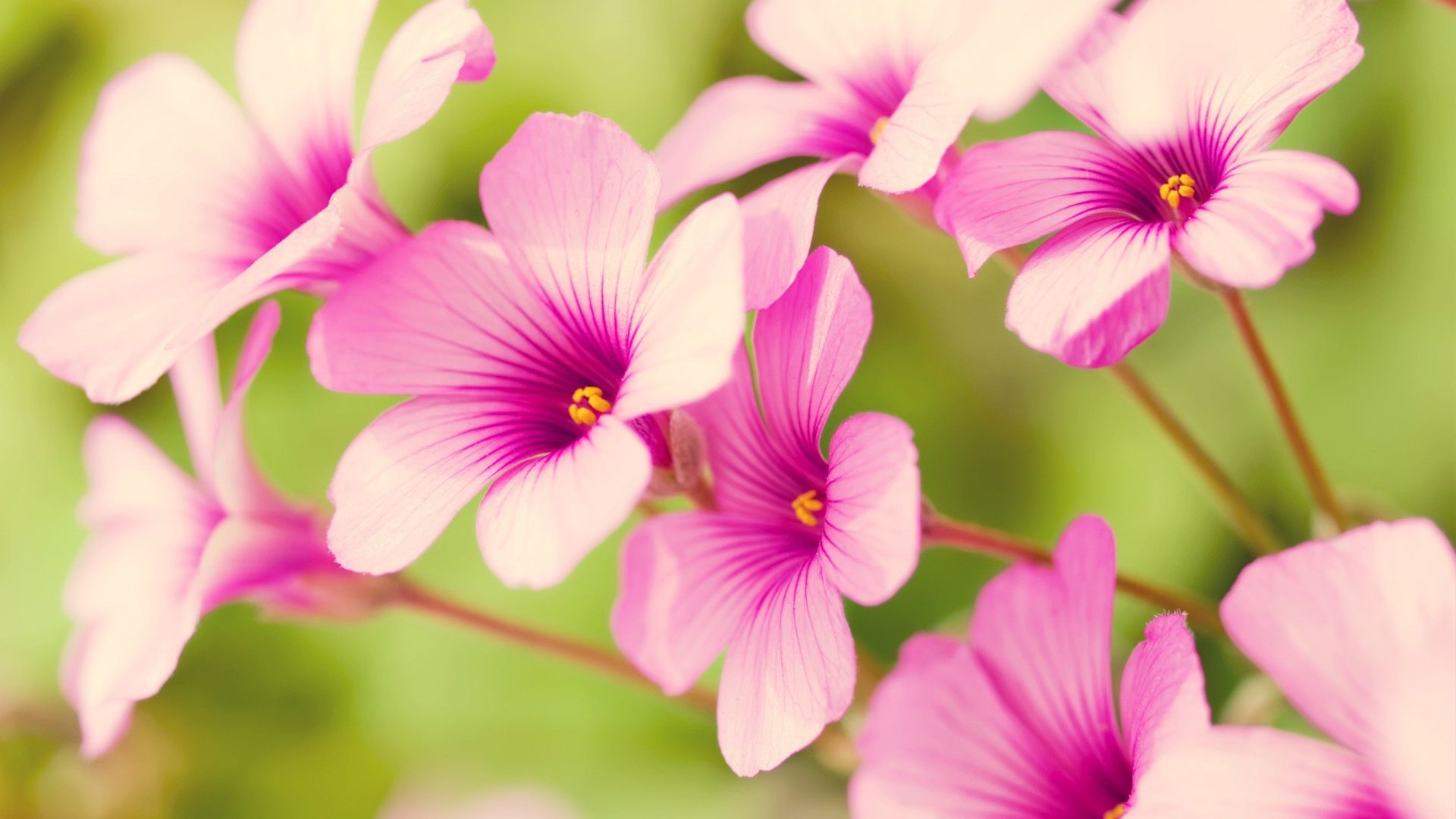 Spring flowers spring flower 1920x1080 wallpapers 1920x1080 spring flowers spring flower 1920x1080 wallpapers 1920x1080 wallpapers pictures mightylinksfo