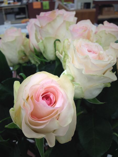 Northwest Wholesale Florists Roses Wholesale Flowers Wedding Flower Identification Rose