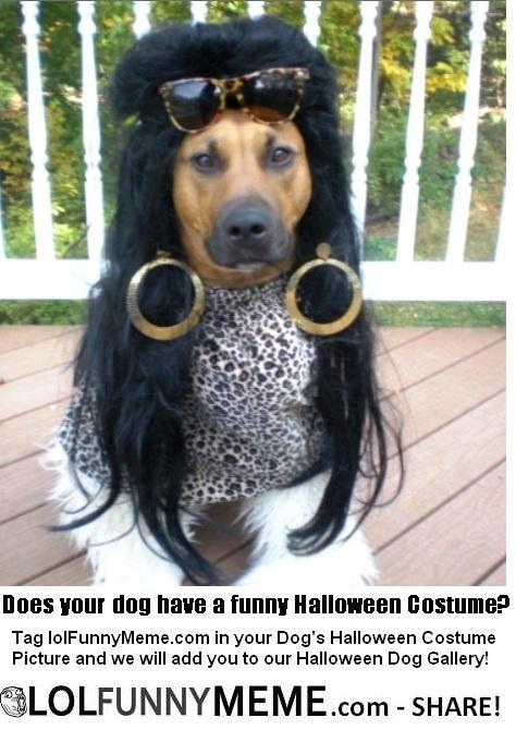 Fan Halloween Dog Costume Gallery Dog Costumes Funny Dog