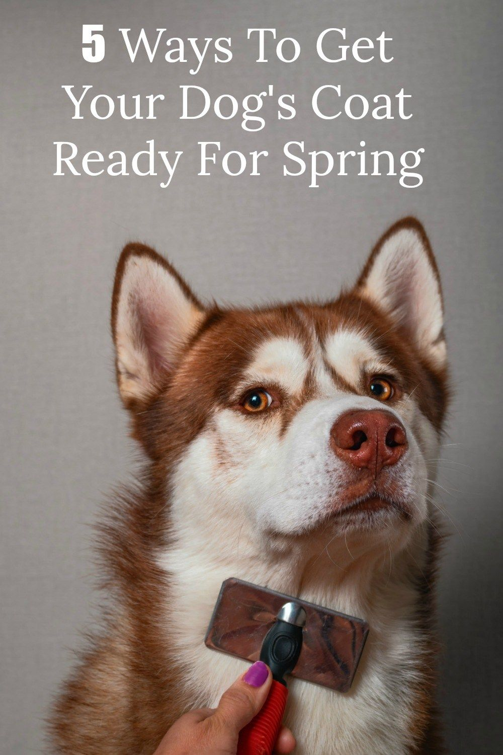 5 Ways To Get Your Dog S Coat Ready For Spring Now Dog Coats