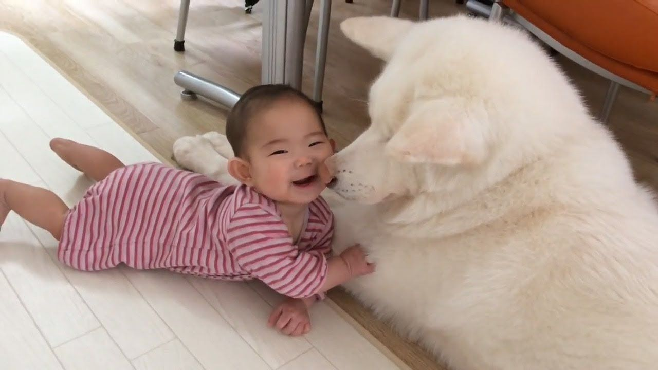 Funny Dogs And Babies Are Best Friends Cute Babies And Pets Video