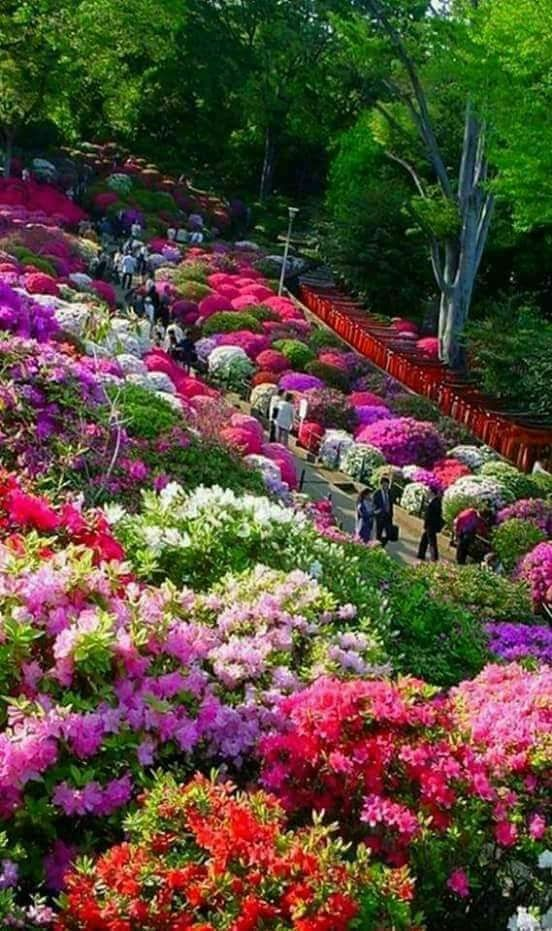 Butchart Gardens in British Columbia, Canada. #butchartgardens