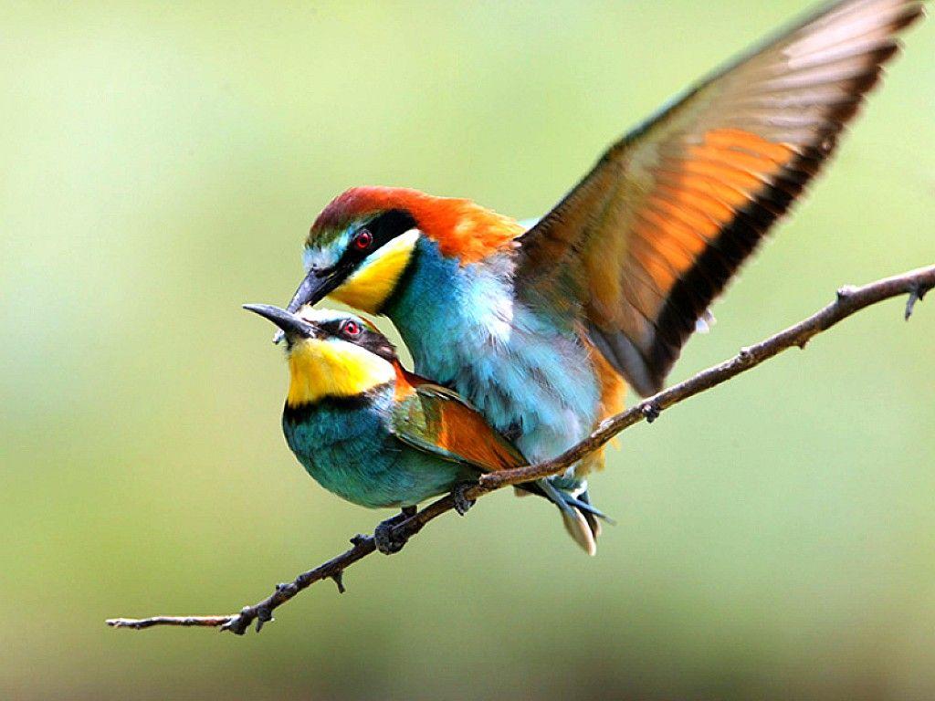 Cute Bird Images 10 Cutebirdimages Cutebird Birds Wallpapers Hdwallpapers Love Birds Bird Wallpaper Pet Birds