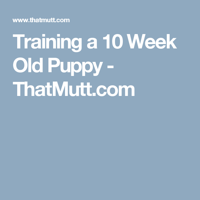 Training a 10 Week Old Puppy Puppies, Dog
