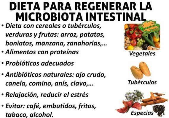 Dieta Para Regenerar La Flora Intestinal Dañada Alimentos Con Proteinas Gastritis Dieta Probióticos