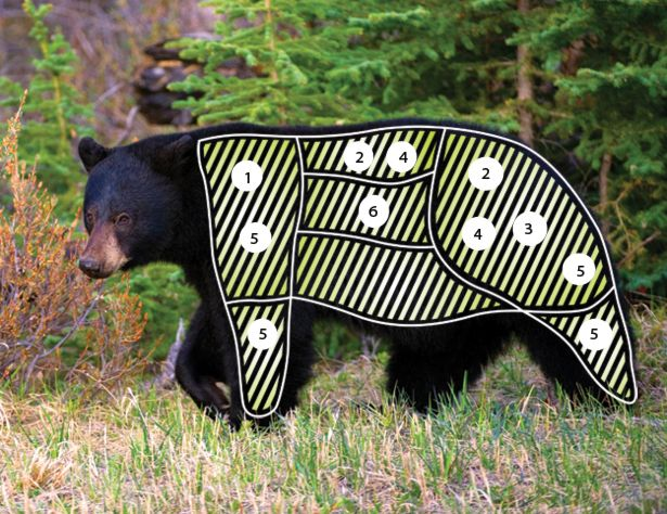 How to Hunt, Cook, and Eat Bears for Survival