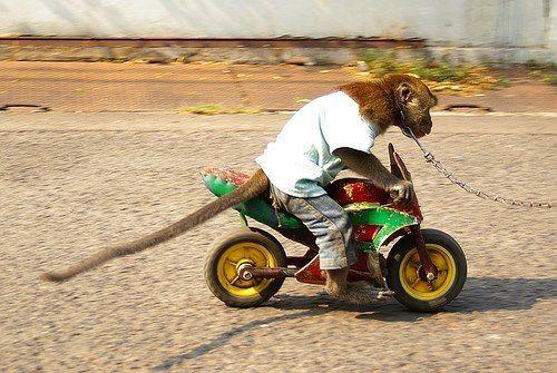 Motorcycle Monkey Monkey Pictures Funny Monkey Pictures Monkey
