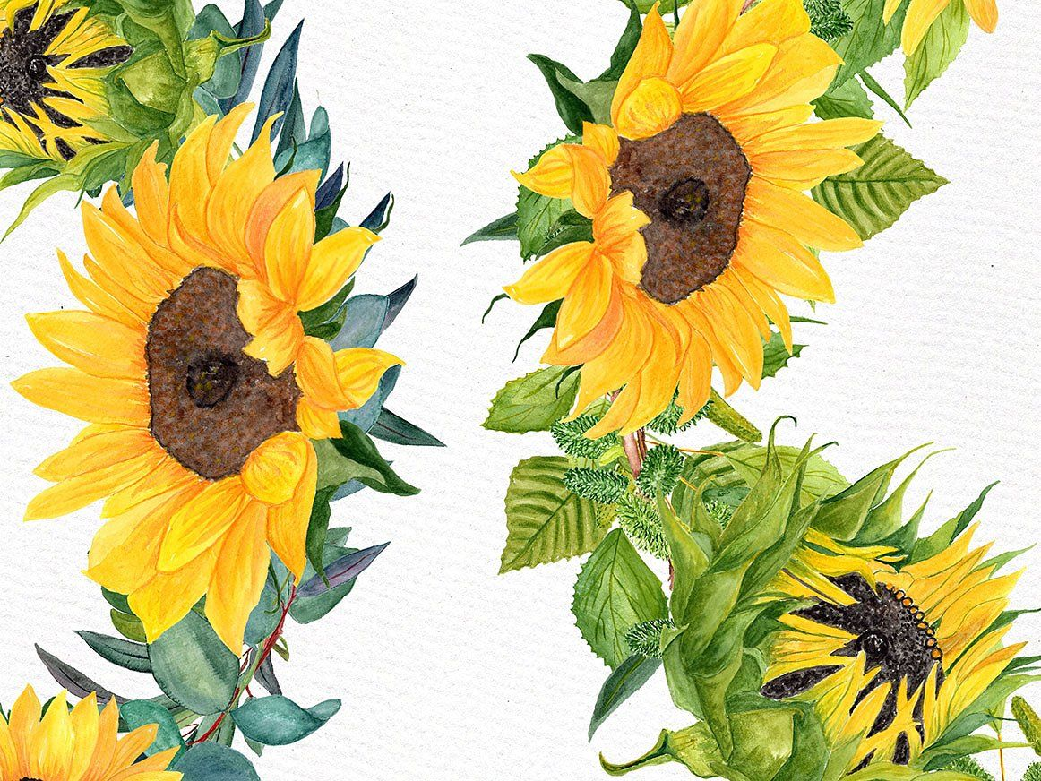 Sunflower Clipart Watercolor Wreath Floral Illustrations