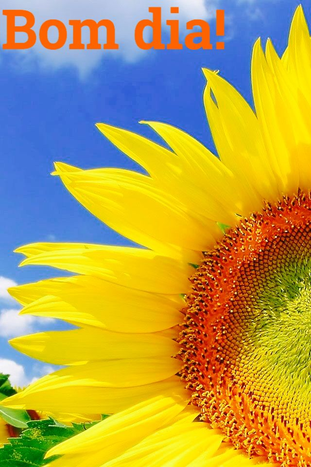 Pin by claudia marques on bom dia pinterest explore sun flowers pretty flowers and more mightylinksfo Images