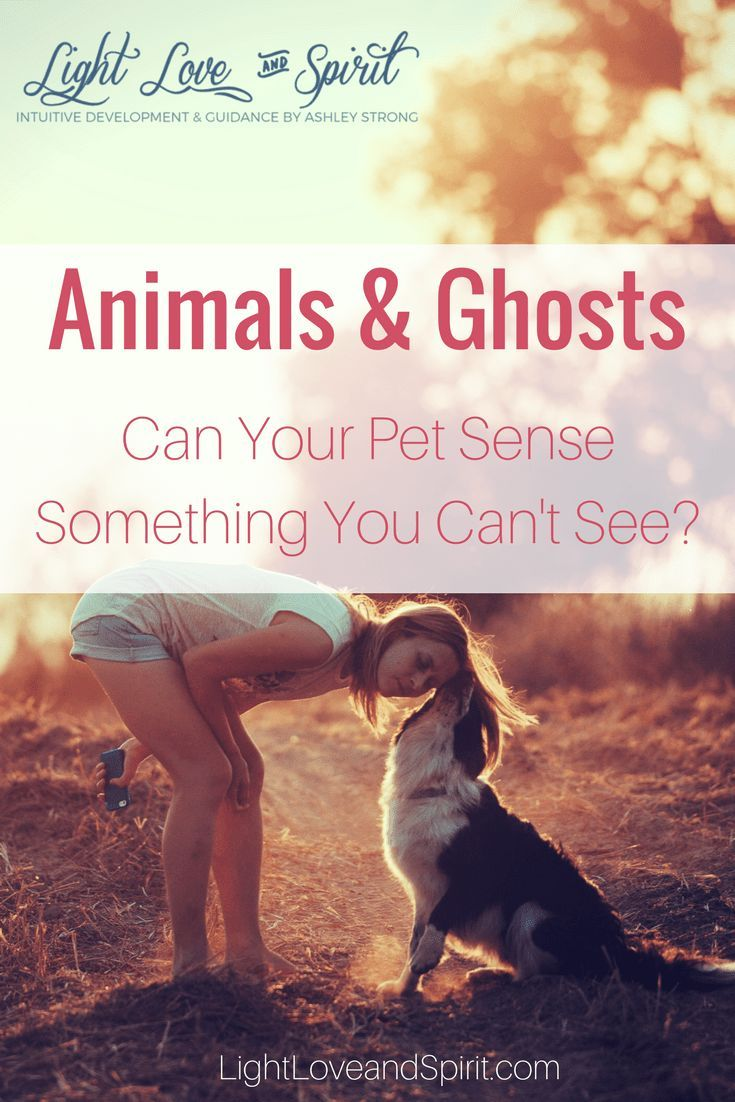 Can Animals Sense Ghosts And Spirits? Can dogs see