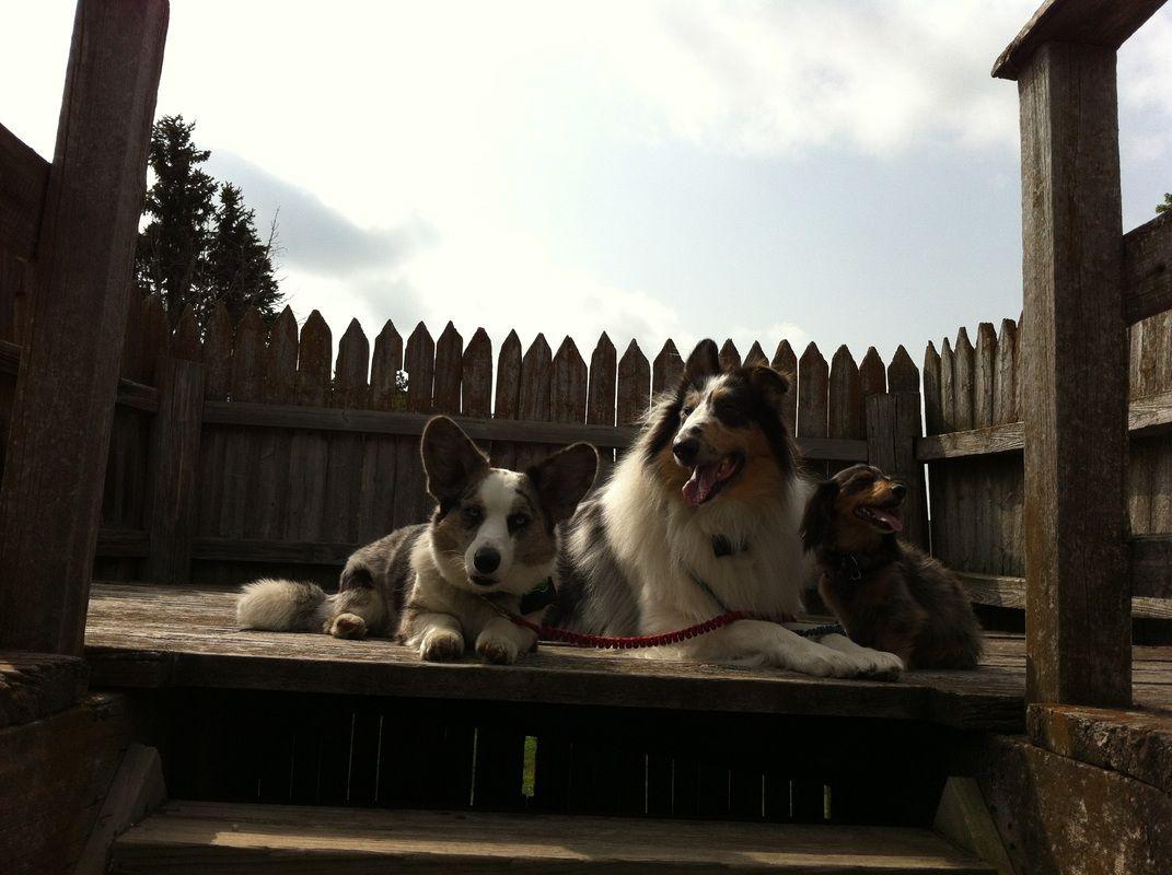 Fort Kearny, Nebraska Dogs, Pet travel, Family dogs