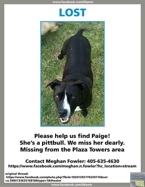 Animals Lost In Oklahoma Tornado Moore Oklahoma Tornado Lost And Found Animals Facebook Losing A Dog Losing A Pet Dog Sounds