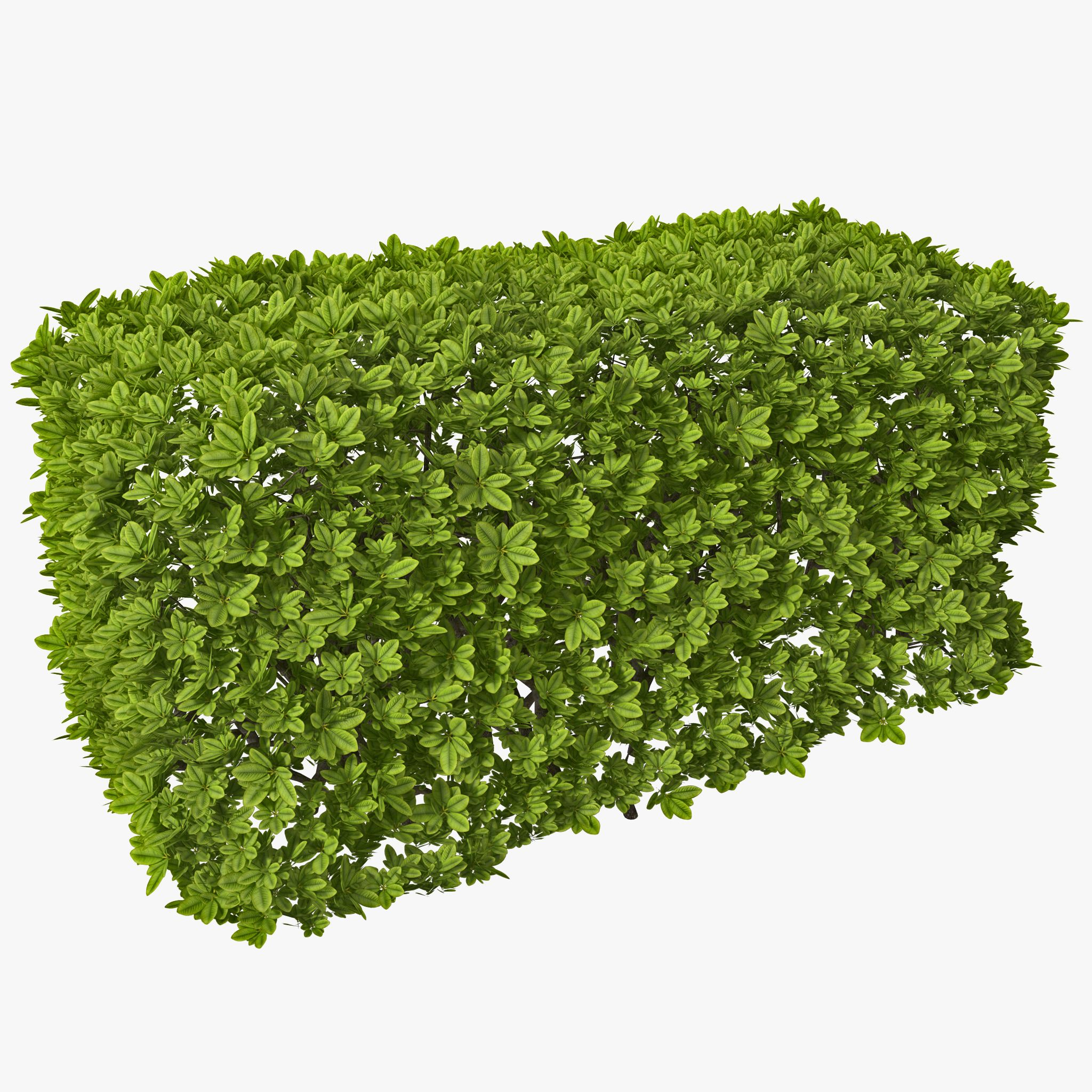 3d Rectangular Box Hedge Model 3d Model Tree Textures Trees To Plant Plant Images