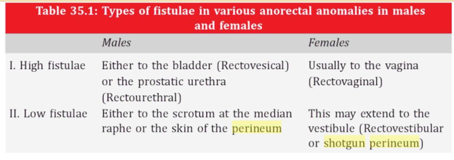 Shotgun perineum : Congenital anomaly of females   ANATOMY   Pinterest