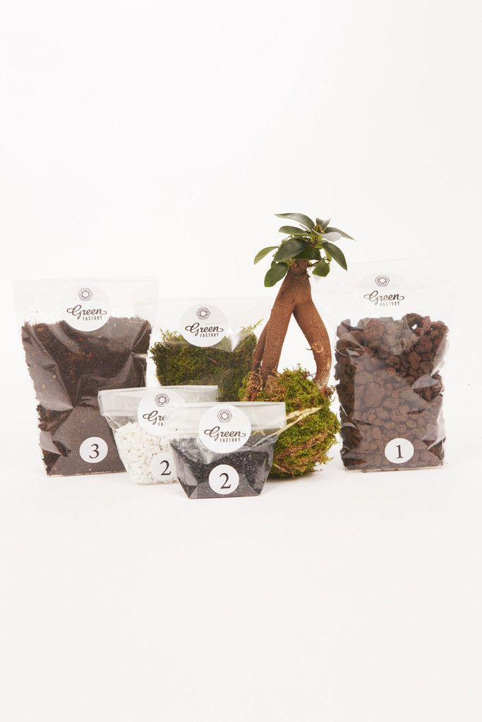 Kit Terrarium Humide Petit Ficus Green Factory Atelier Green