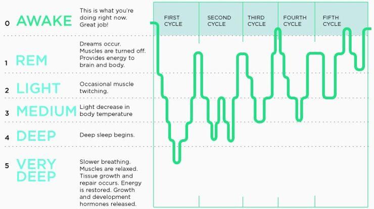 Best forex cycle sleep