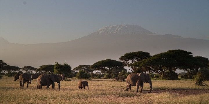 Amboseli National Park, Kenya, Africa
