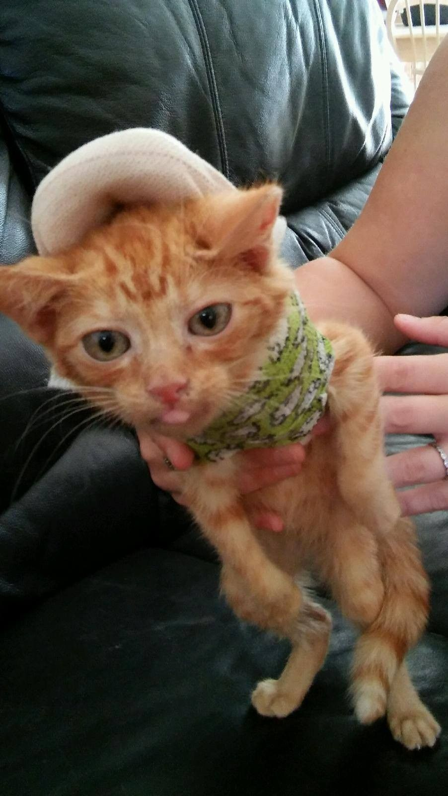 Kitten Hit By A Car Gets Stronger In Tiny Body Cast Kitten Cats Cast Pretty Cats