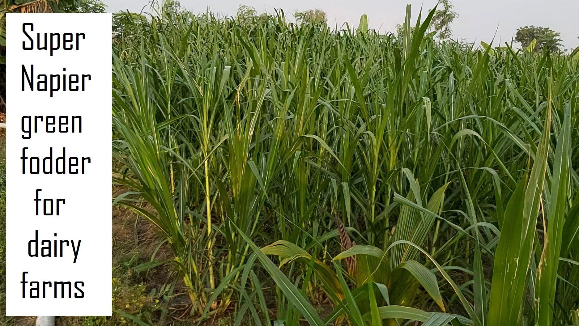 Pin on Organic Farming in India
