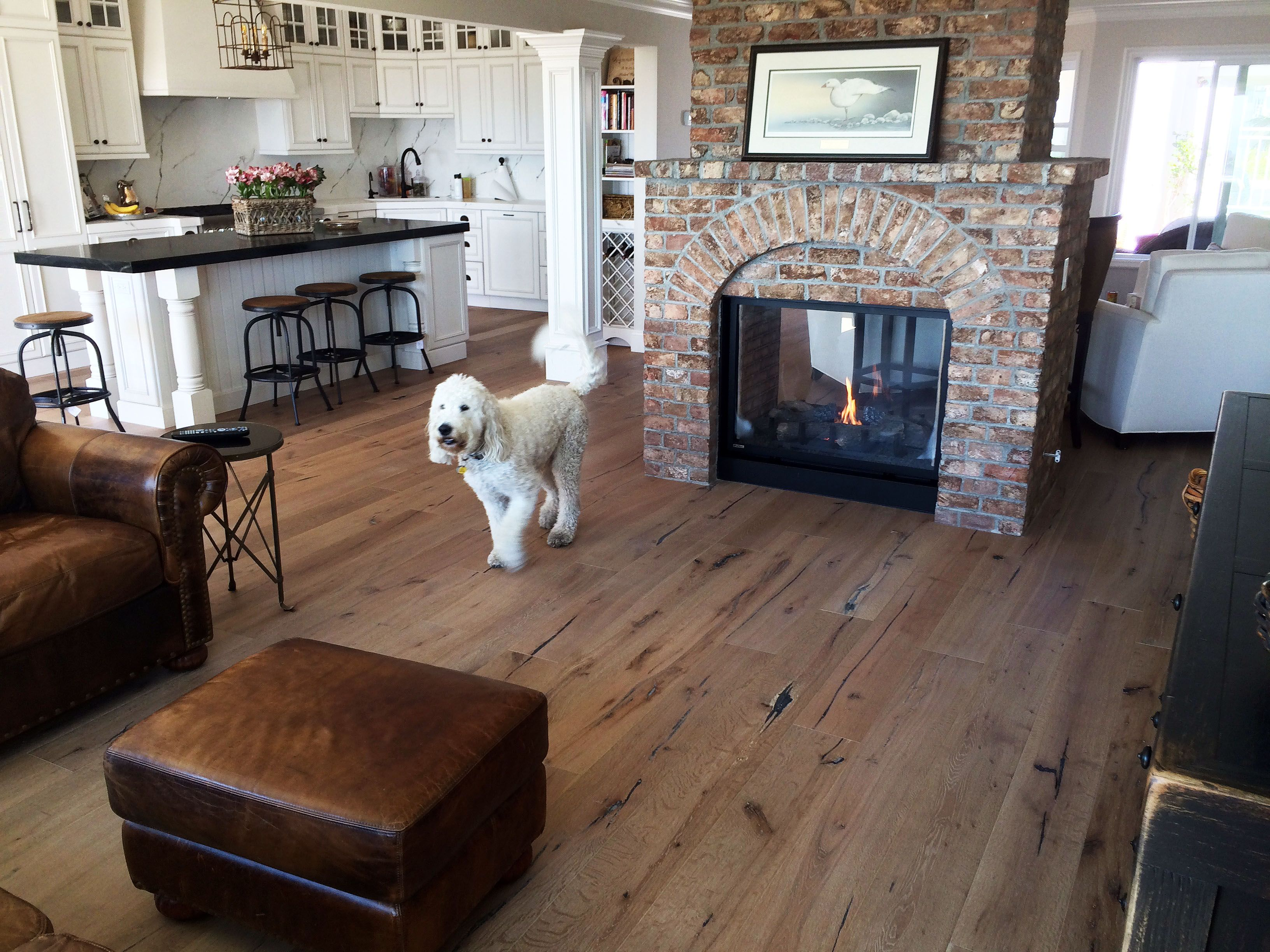 Dogs and hardwood floors are a perfect match! Just make