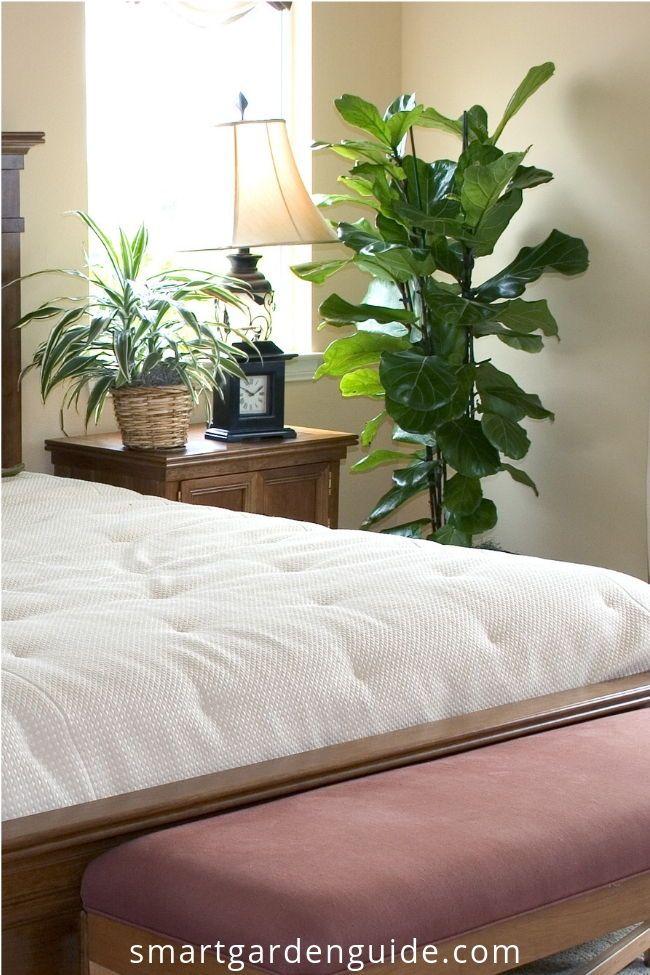 houseplants for bedrooms indoor plants for the bedroom