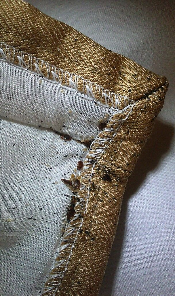 This month, we'll be focusing on…bed bugs! Do you hear