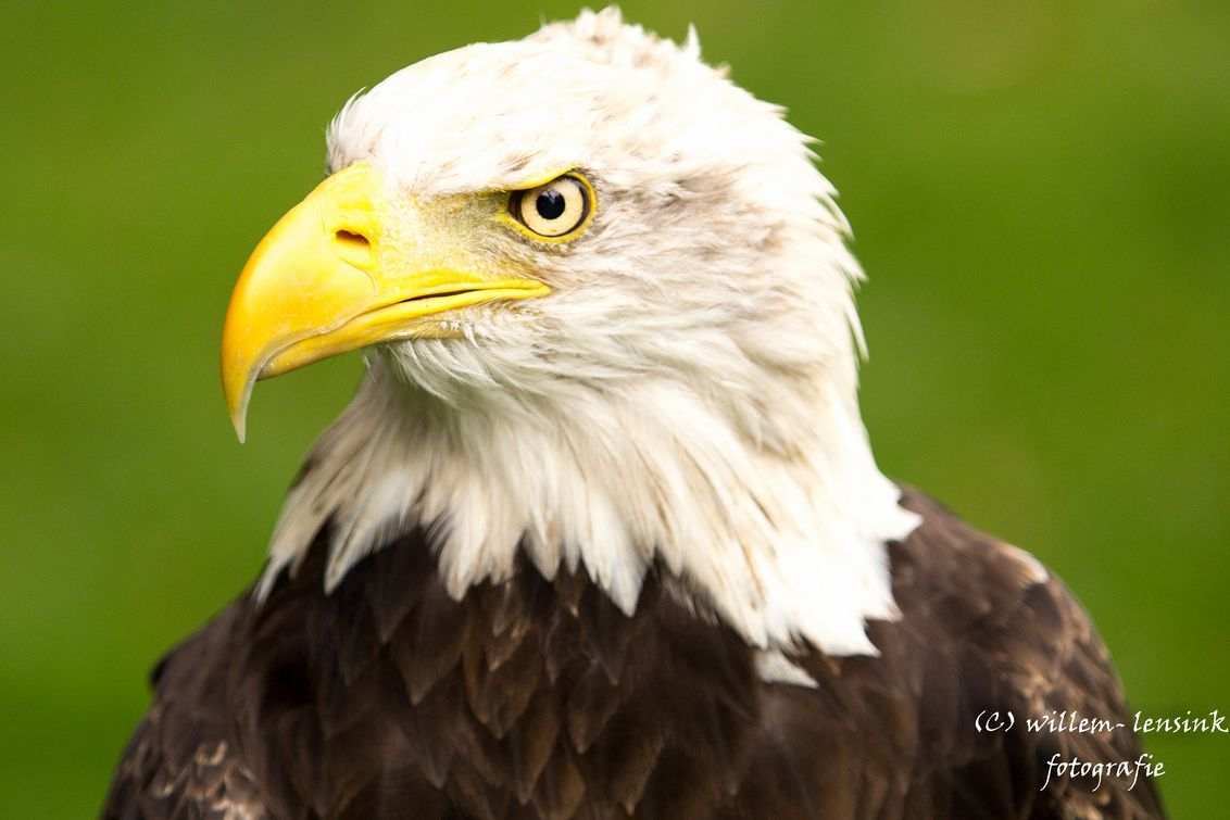 The 60 Best Images About Fantasie Dier On Pinterest Draw Drawing Bald Eagle Diagram Golden Related Keywords Suggestions Tutorials And Animals Pets