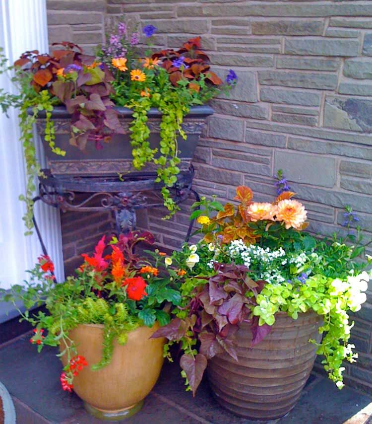 Home Ideas Review In 2020 Patio Flower Pots Front Porch Flowers Porch Flowers