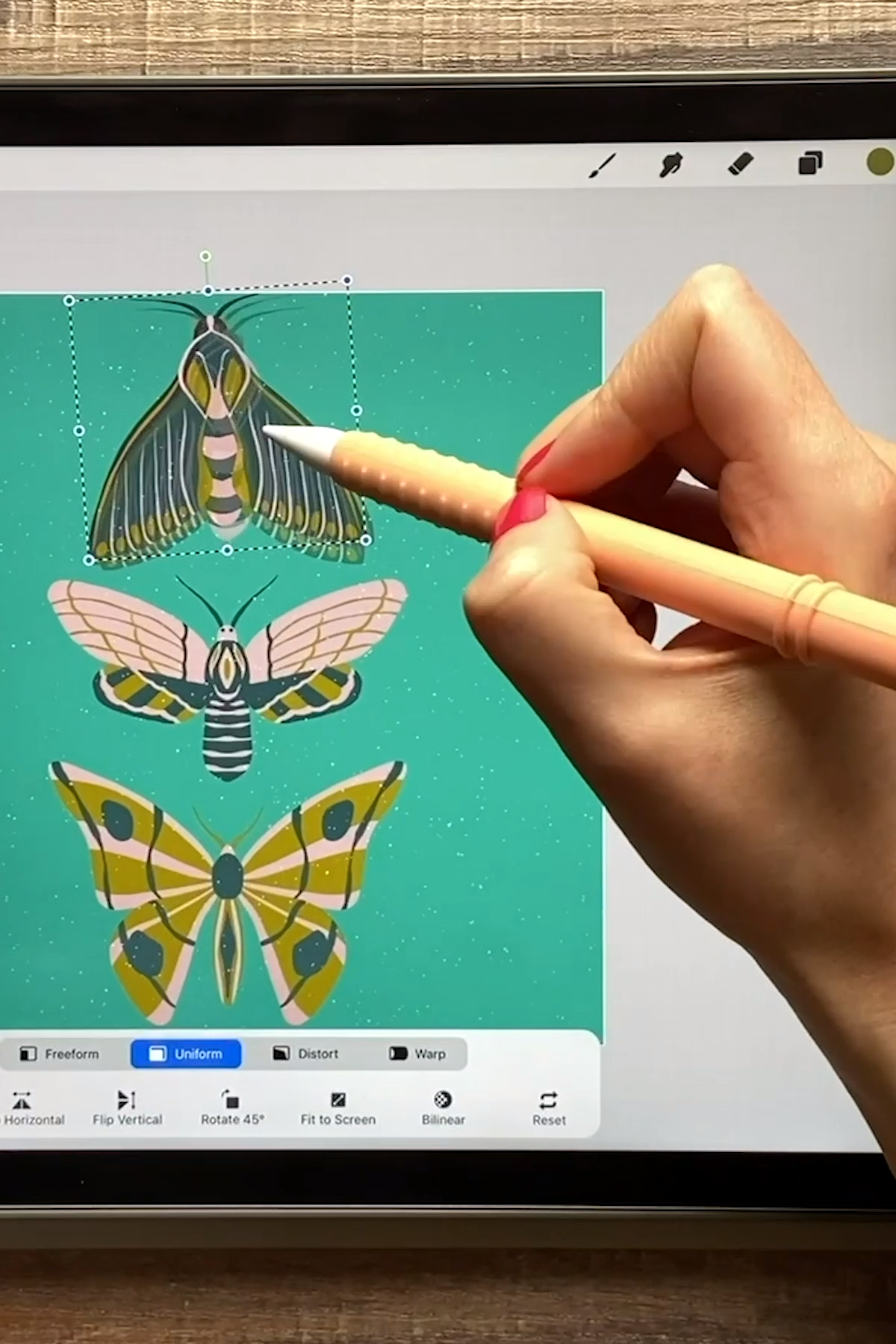 Insect Illustrations And Animations On Your Ipad In Procreate Video In 2020 Procreate Ipad Art Really Cool Drawings Ipad Painting