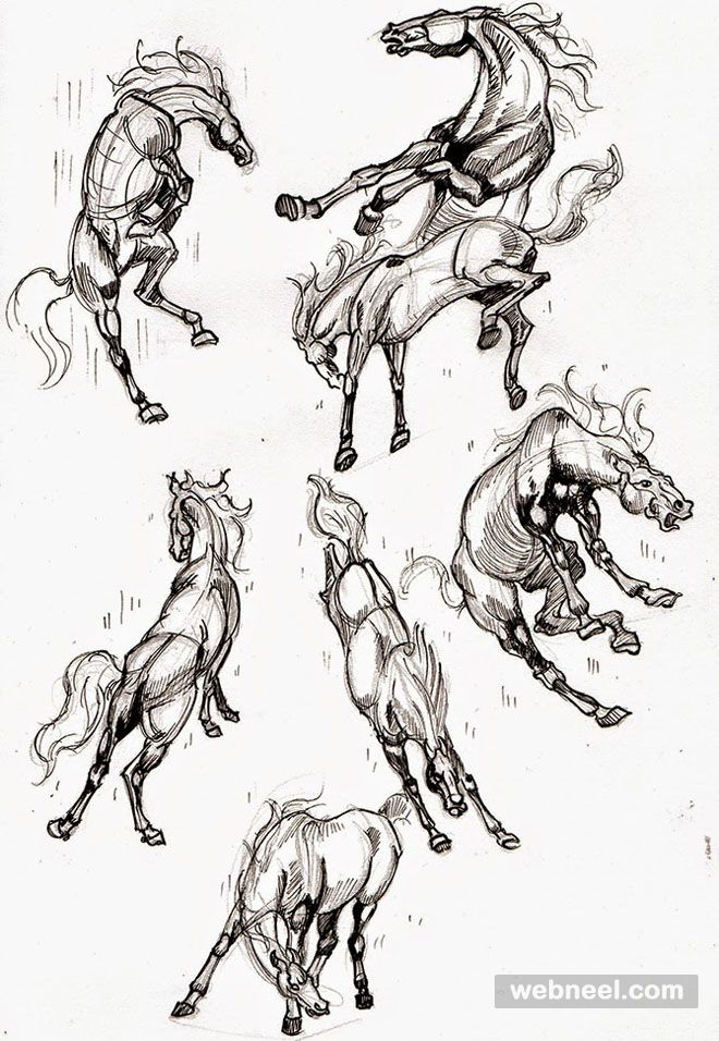 25 Beautiful Animal Drawings For Your Inspiration How To Draw