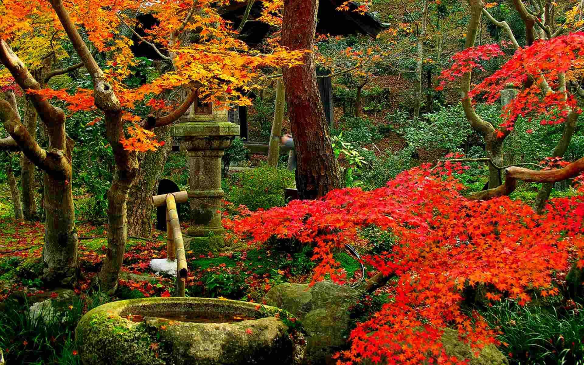 Image gallery jardines de japon for Jardin en couloir