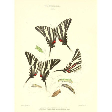 Posterazzi Synopsis of North American Butterflies 1979 Papilio 2 Canvas Art - Mary Peart (24 x 36)