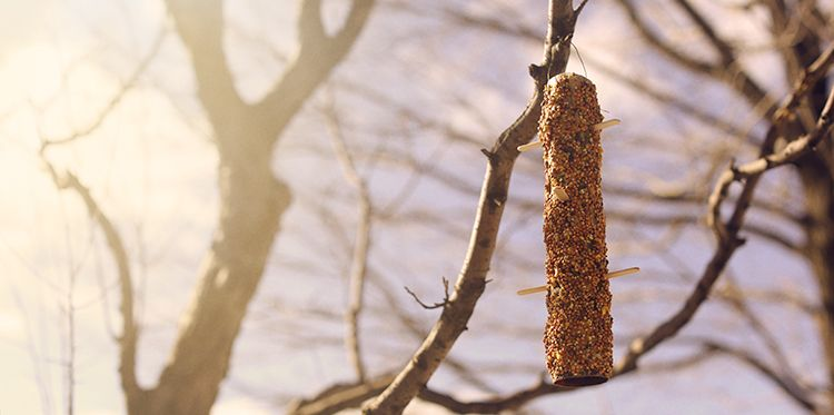 Upcycle your birdfeeder on the Minute Maid Blog.  So simple!
