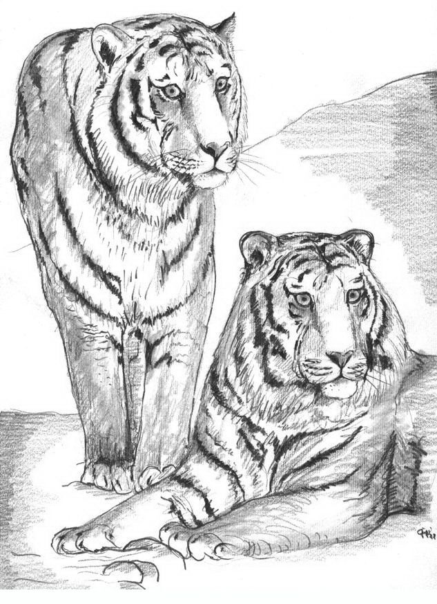 Tigers Adult Coloring Pages