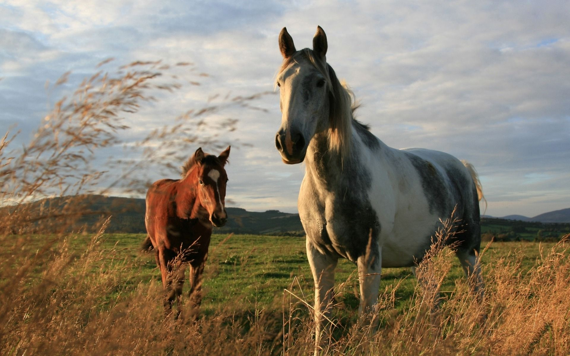Cool Wallpaper Horse Couple - cf586c79340a10f8a32b878fdd524ea0  Photograph_14367.jpg