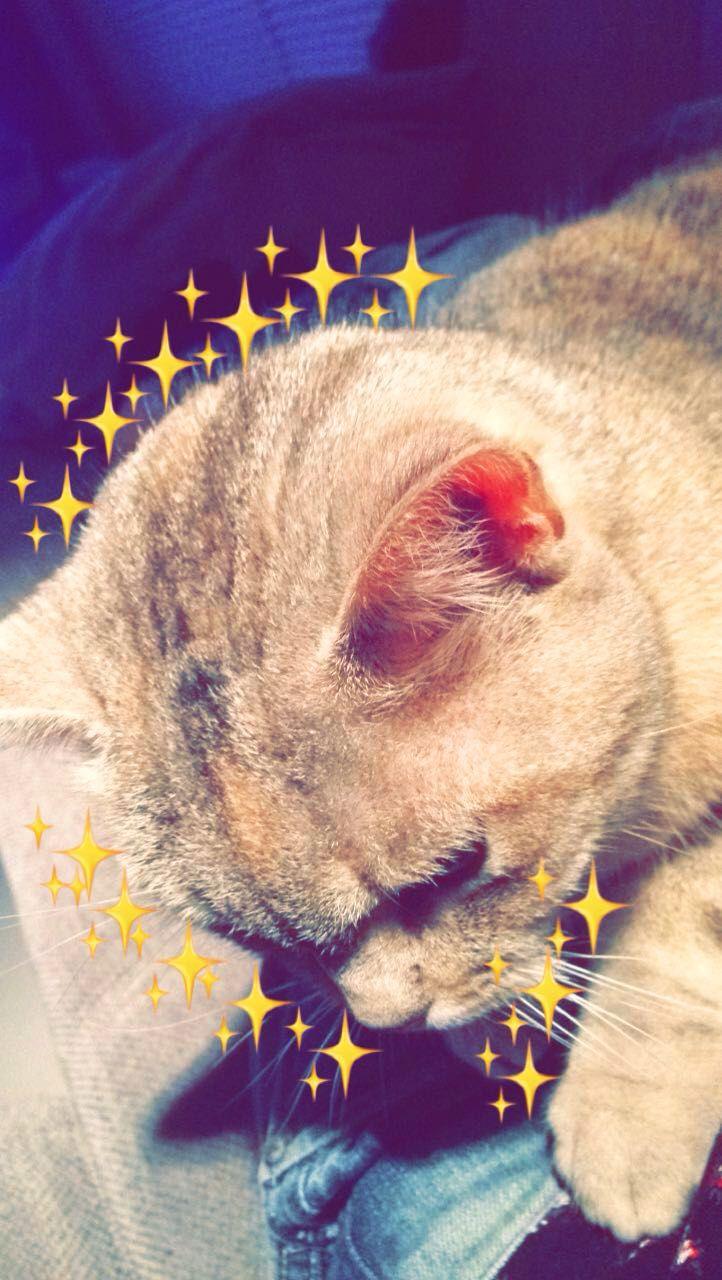 Pinterest Universexox Emoji Pictures Cute Animals Creative Snapchats
