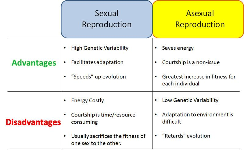 List the advantages and disadvantages of sexual and asexual reproduction in plants