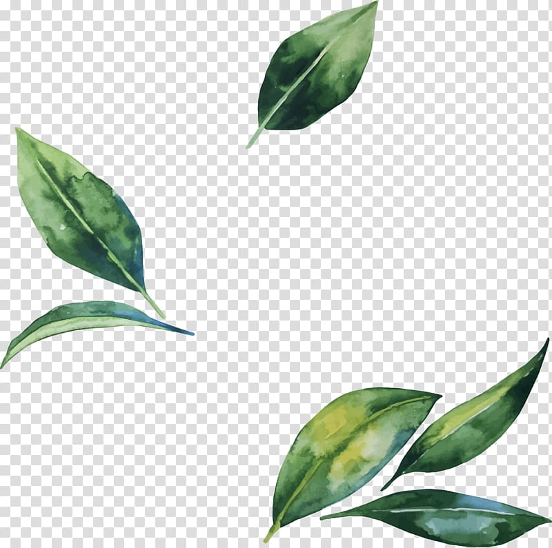 Leaf Flower Illustration Hand Painted Watercolor Leaves Green Leaf Transparent Background Png Clipart Flower Illustration Leaf Illustration Watercolor Leaves