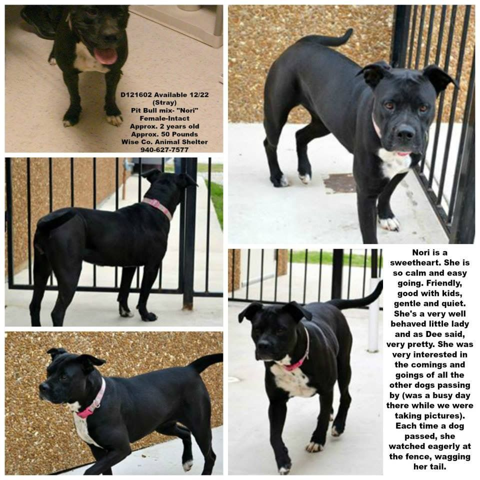 Best CATSDOGSTXWISE COUNTY ANIMAL SHELTER DECATUR TX - Dog passes owner returns 2 years