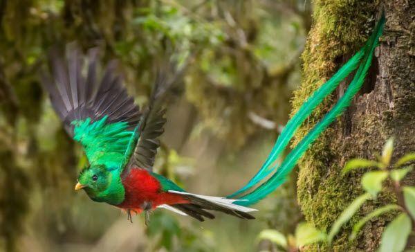 The Resplendent Quetzal (Birdwatching Costa Rica Style - First Choice Blog)