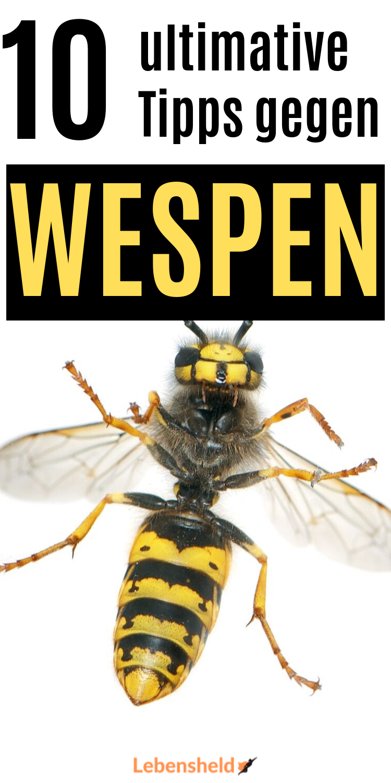 Enorm Effektive Tipps Gegen Wespen Diese Anleitung Wird Dir Sofort Helfen Tipps Wespenfalle Wespe