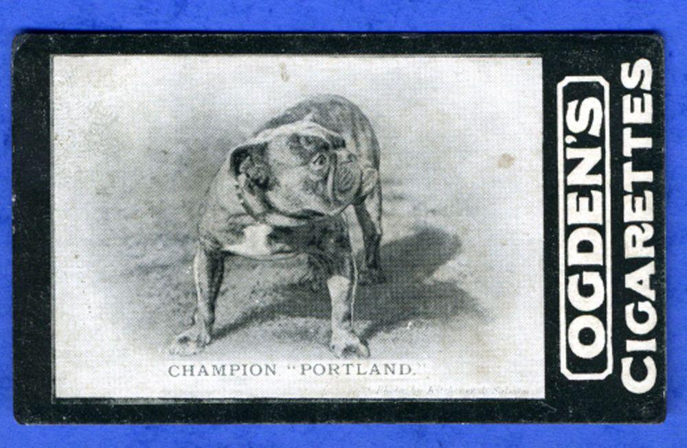 BULLDOG ANTIQUE OGDENS TAB NAMED DOG CIGARETTE CARD #4