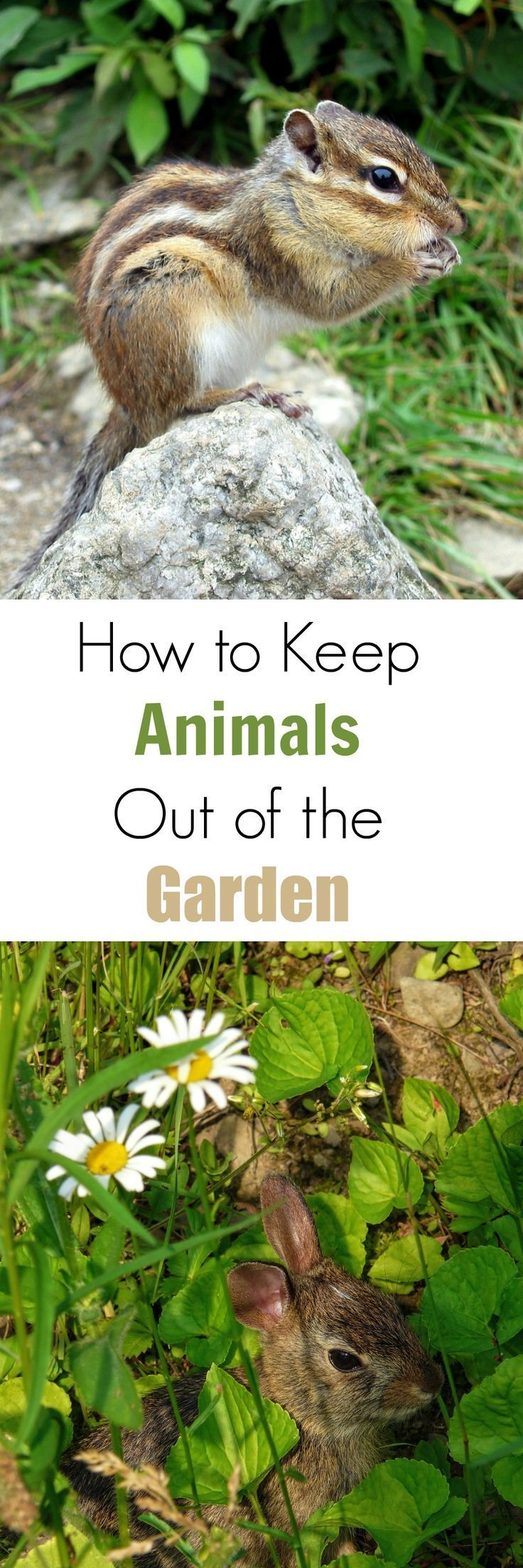 how to keep animals out of the garden - Garden Ideas To Keep Animals Out