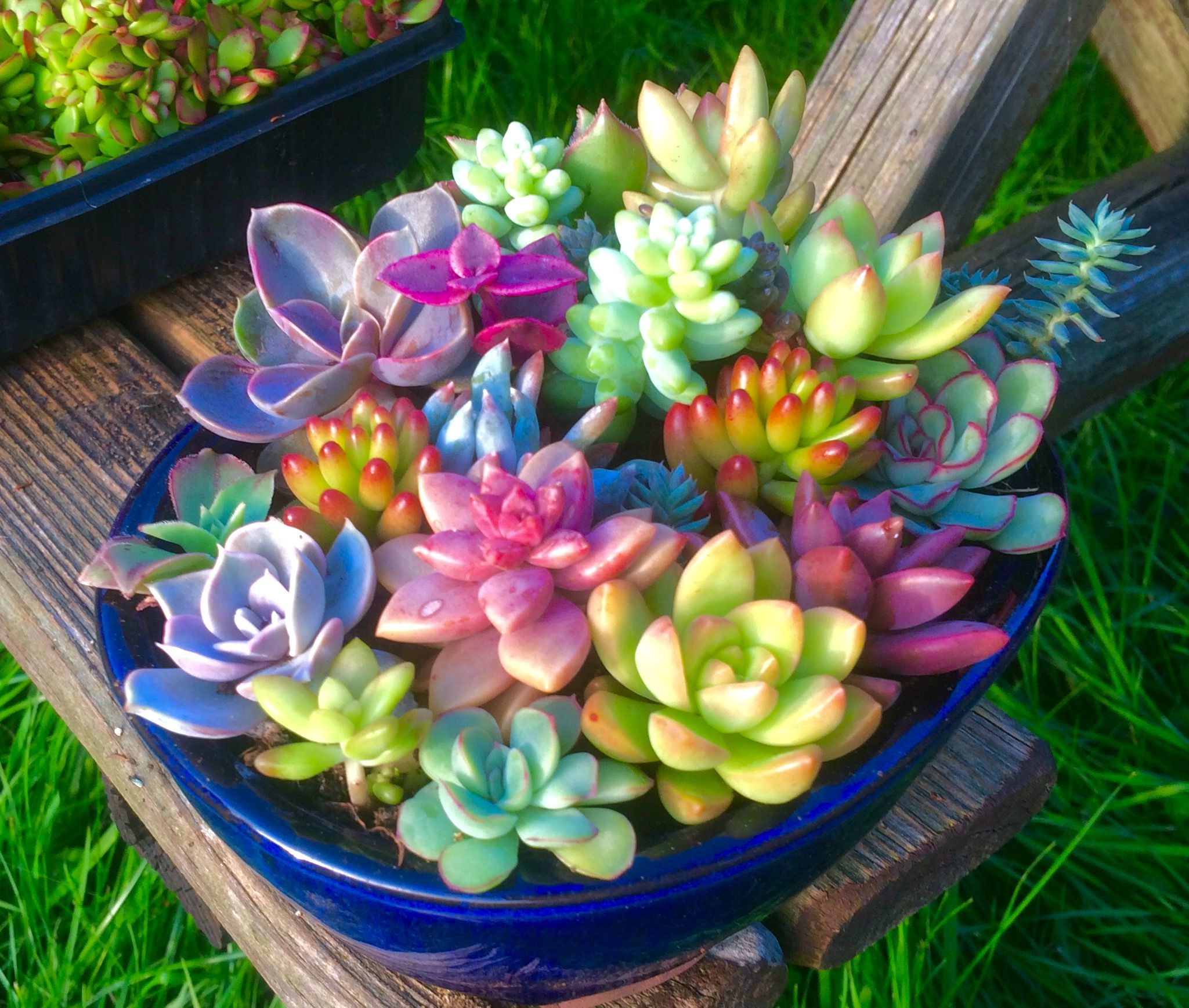 Succulent Arrangement With 20 Species Seen From Side This Includes