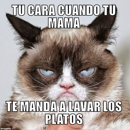 Funny Pictures Photo Frames Text Templates Grumpy Cat Humor Funny Grumpy Cat Memes Best Cat Gifs