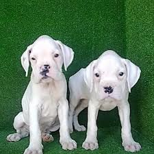 White boxers steal my heart!!!