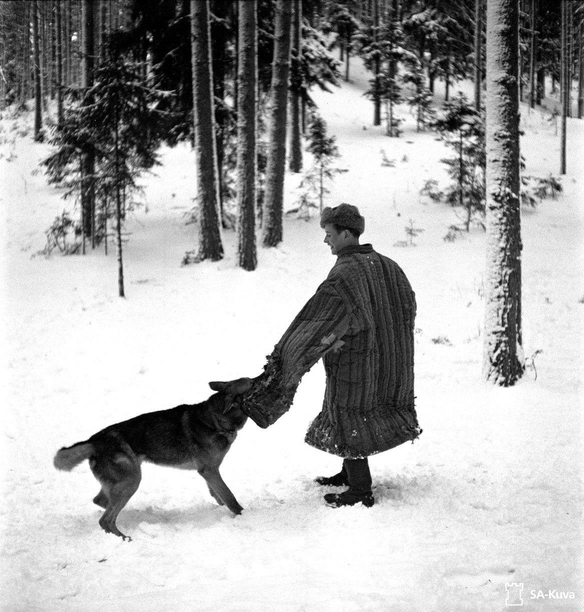 A Finnish Dog Trainer At The Hameenlinna War Dog School Instructs