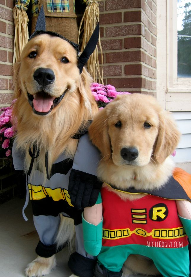 Cute Dog Costumes Image By Shanna Fera Kelly On For The Love Of