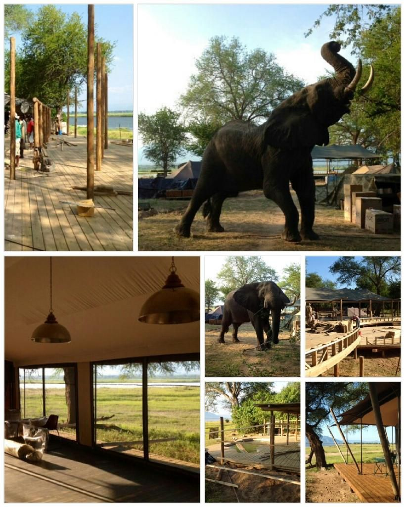 Our Ruckomechi building inspector seems pleased with the progress of the camp rebuild to date... as are we, as it all comes together for the season's reopening next week! Ruckomechi Camp is a much-loved Zimbabwe safari favourite that has been operating for a number of years. Totally revamped, it will still overlook the same wide stretch of the Zambezi River, with the dramatic purple-hued Zambian escarpment in the distance.